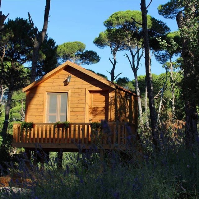 cozyhome  forest  trees  blue sky  lebanon jnoub livelovejnoub ...