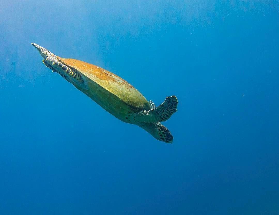 Down we go... shot in amed indonesia bali underwaterworld ...