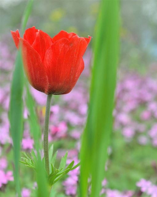 صباحكم ورد 🌷 spring flowers nature garden ...