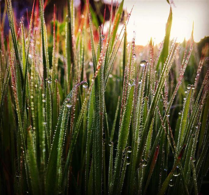 Water droplets 💦 ___________ raseelabdophotography photographyislifee...