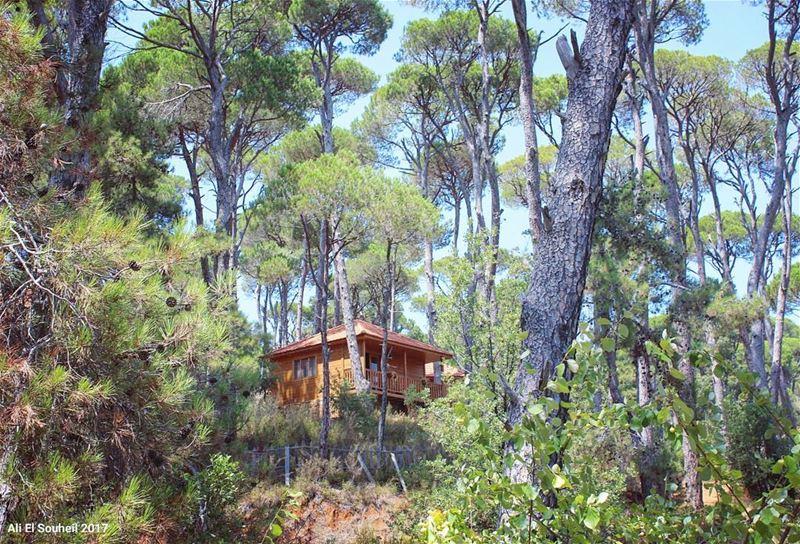 tb jezzine forest pine trees wood house nature southlebanon ... (La Maison de la Forêt)