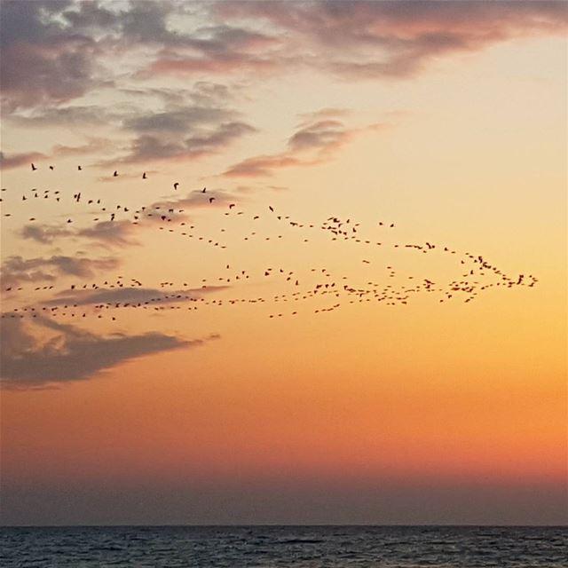 A sunset like no others when storks return for springtime in Byblos !... (Byblos)