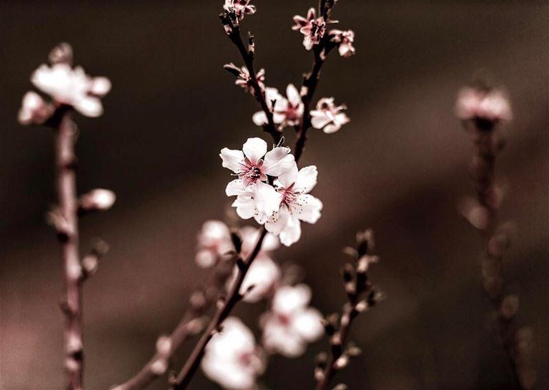 🍂🌸🍂بعض الأرواح جنة......وزهر أبيض ig_turkey ig_daily ig_shotz ... (West Bekaa)