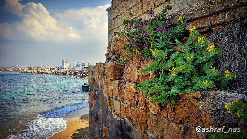 كما ينبت العشب بين مفاصل صخرةوُجدنا غريبين معاً...وكانت سماء الربيعتؤلف... (Tyre, Lebanon)