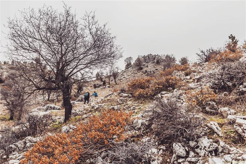 Location: Ehmej, Jbail, Lebanon Date: 18-03-2017 Instagram : @jadmakarem... (Ehmej, Mont-Liban, Lebanon)