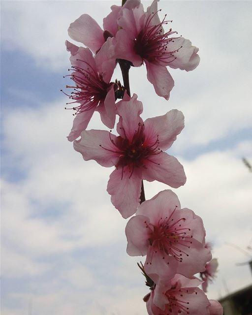 🌼🌼🌼🌼 シAweSomeNesSツ photographer noedit flower mycapture ...