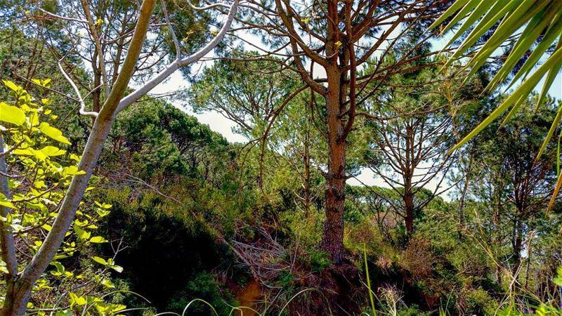 Nature = Quietness nature quiet quietness green trees tree huge nice...