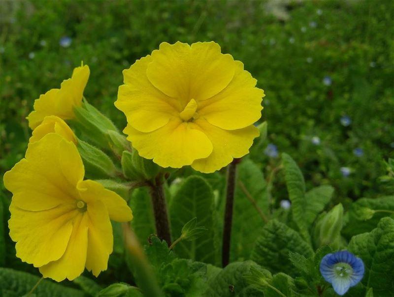 シAweSomeNesSツ photographer noedit flower mycapture yellowflower ...