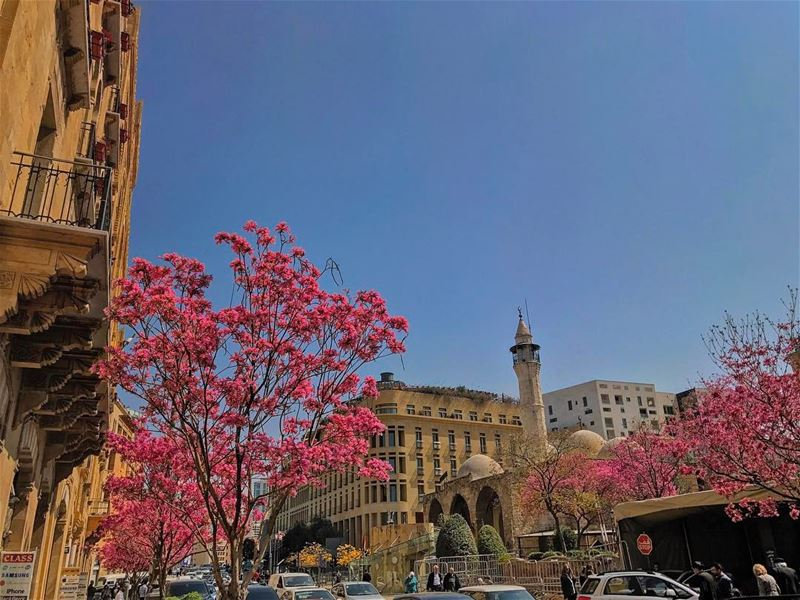 Oh Happy Day🌸, Oh Sunny Day☀️ (Downtown Beirut)