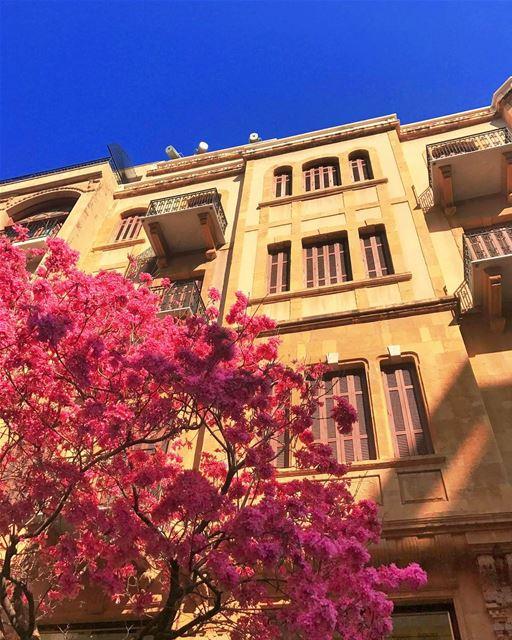SprinK 👚👙👛🐽🐷🌸🌷🎟🎀💓💗💖💘💝 beirut spring tree pink building ... (Downtown Beirut)