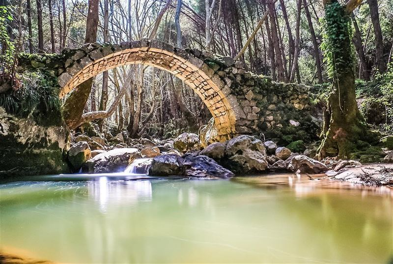 Nature knows well how to reveal Spring ✌🏻 nature spring bridge river ...