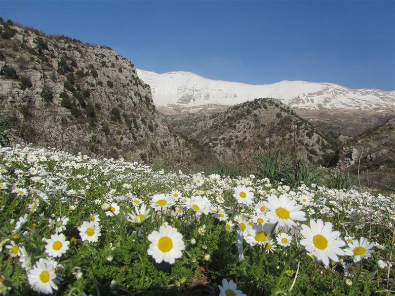 lebanon nature landscape spring hiking trekking outdoors mountain ...