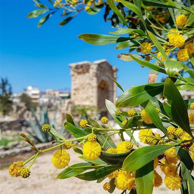 ruins ancientrome archeo tyr tyre lebanon rovine archeologia ... (Tyre, Lebanon)