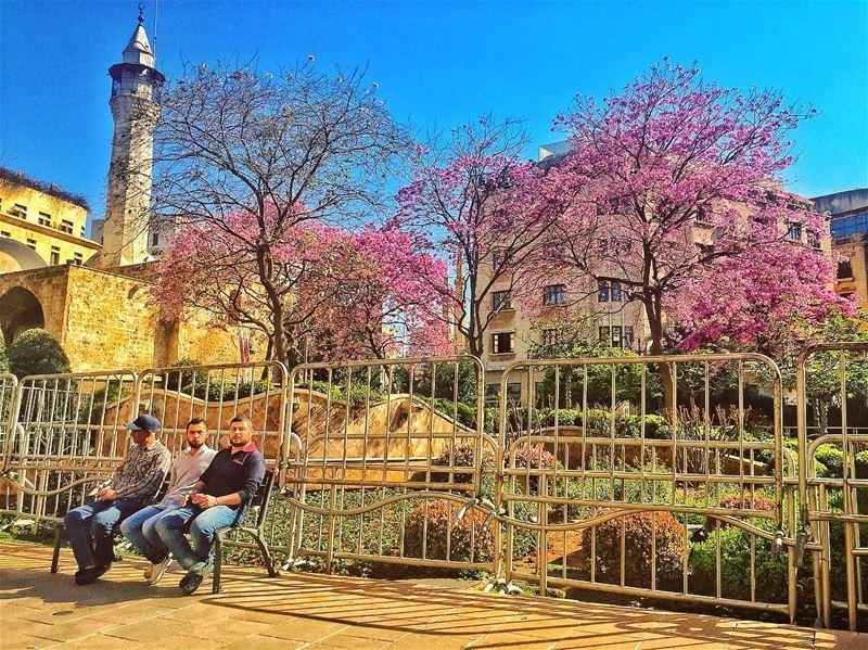 Beirut spring 🌸 livelovelebanon ... (Beirut, Lebanon)