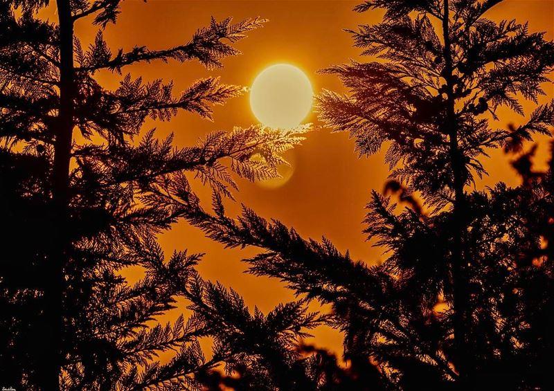 Golden sunset...... livelovebeirut instadaily nikon instagood ... (Sawfar, Mont-Liban, Lebanon)