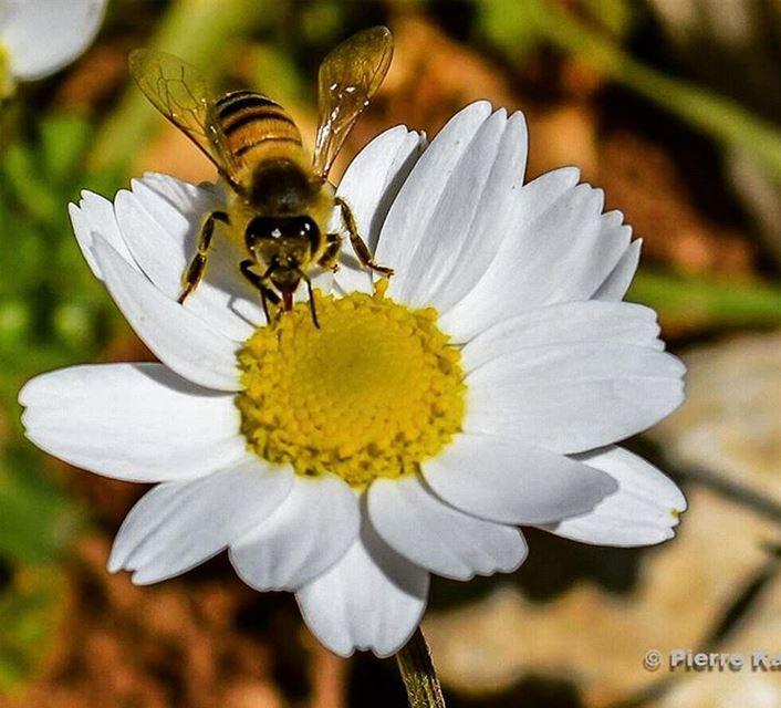 كن ك النحلة إذا أكلت أكلت طيبا، وإذا وضعت وضعت طيبا، وإذا وقعت على ...