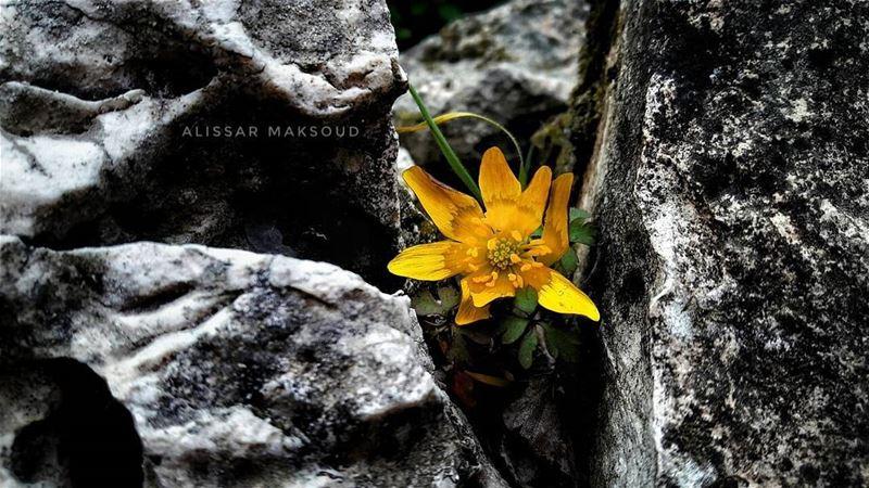 """"""" ازرع جميلا ولو غير موضعهفلن يضيع جميل اينما زرع. """"💫💫💫💫💫💫💫💫💫💫� (Bakhoun, Liban-Nord, Lebanon)"""
