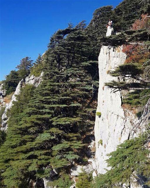 ما تهزني واقف ع شوار ⛰ tannourine hike livelovelebanon lebanon ... (Tannourine Cedars Nature Reserve)