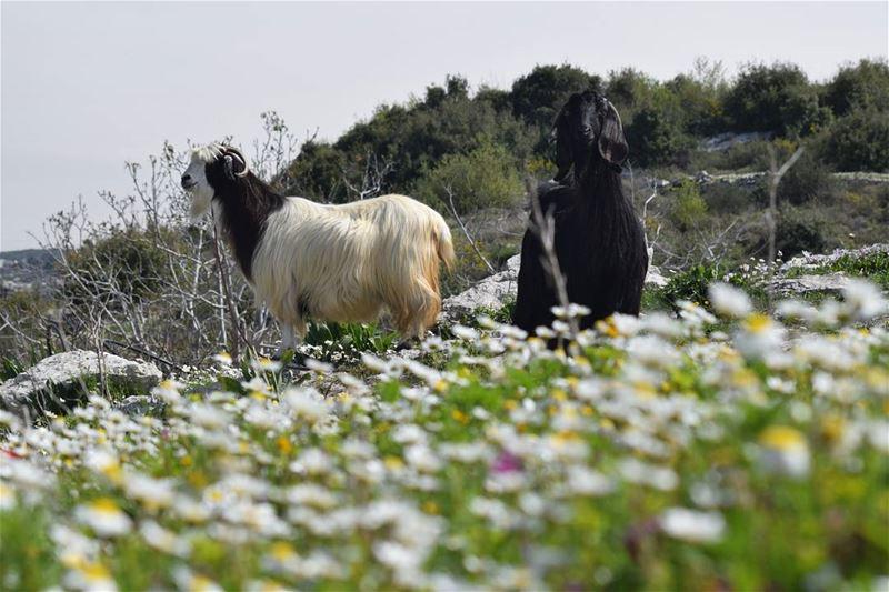 spring livelovelebanon liveloveworld livelovespring flowers ...