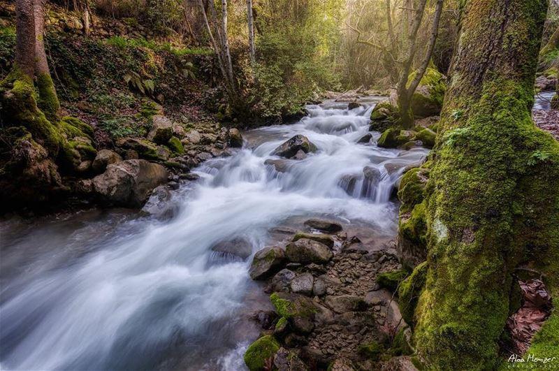 lebanon shouf reserve running river runningriver tree falling ...