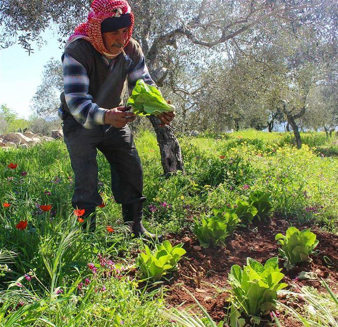 و إيدين تزرع و تخضر الأرض و تزهر مواسم خير ❤ عكار... . . lebanon ... (لبنان عكار)
