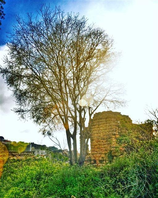 🍀Green Spring 🌞🌿 (Abey, Mont-Liban, Lebanon)