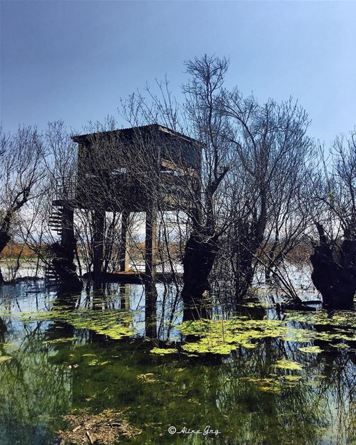 A TreeHouse Above Water 🌳⛺️🏞 treehouse water ammiq wetland tree ... (`Ammiq, Béqaa, Lebanon)