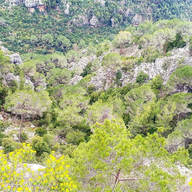 """ Spring is when life's alive in everything "" spring nature... (Broummâna, Mont-Liban, Lebanon)"