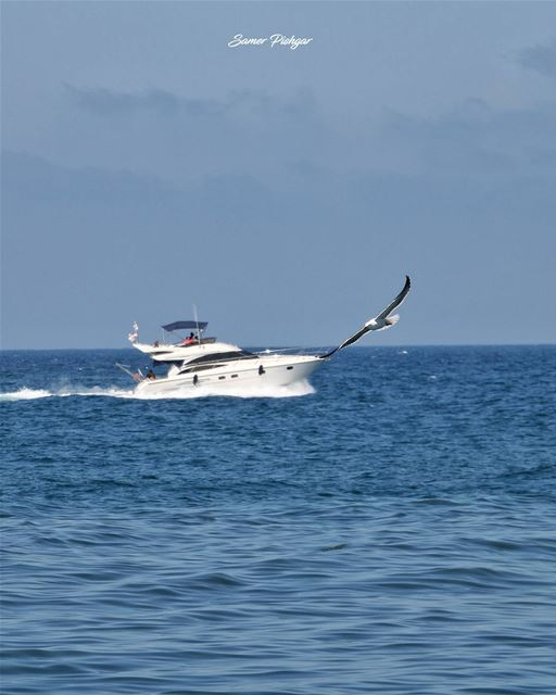 Spread your wings...Beirut... gull birds tv_aqua instablue boat ...
