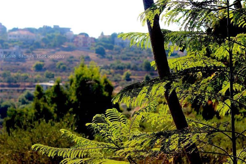 Good Morning😍😍☀☀ lebanon photography travel nature sunshine ... (Tibnîne, Al Janub, Lebanon)