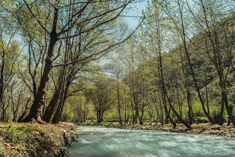 Good morning .... be kind to yourself today 😊 ... nikon photography ... (Btormâz, Liban-Nord, Lebanon)