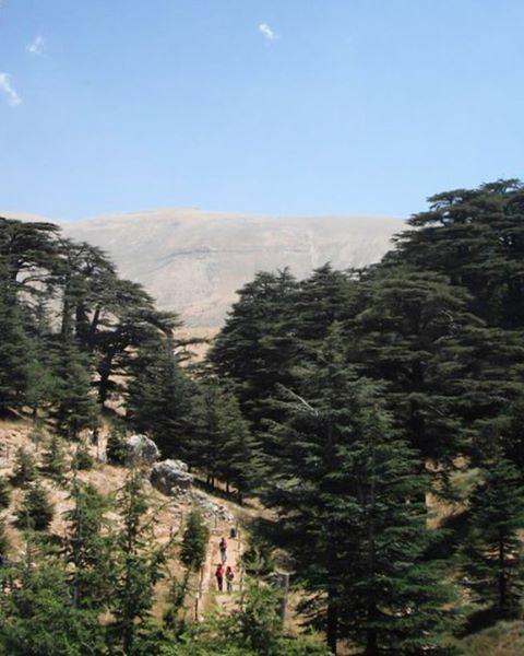 lebanon northlebanon cedars cedarsoflebanon cedarsofgod becharre ... (Cedars Forest)