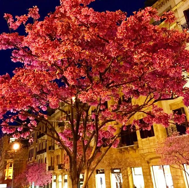 springishere colorfultrees downtown beirut beirutatnight ... (Downtown Beirut)