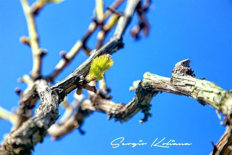 برعم حياتي. sergio_koliana_photography meetlebanon mylebanon ...