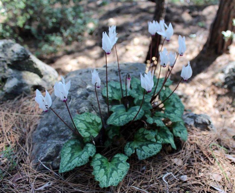 flowerblooming springtime peaceandcalming springfashion ... (Azour - Jezzine)
