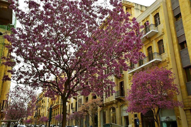 """وسط بيروت (بعدسة """"لبنان 24"""") Beirut Lebanon Spring insta_lebanon ..."""