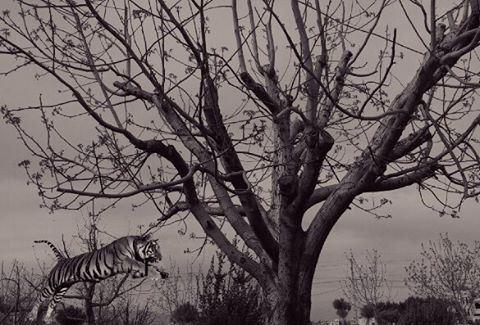 シAweSomeNesSツ myshot photography myeditgivecredit myedition ... (West Bekaa)