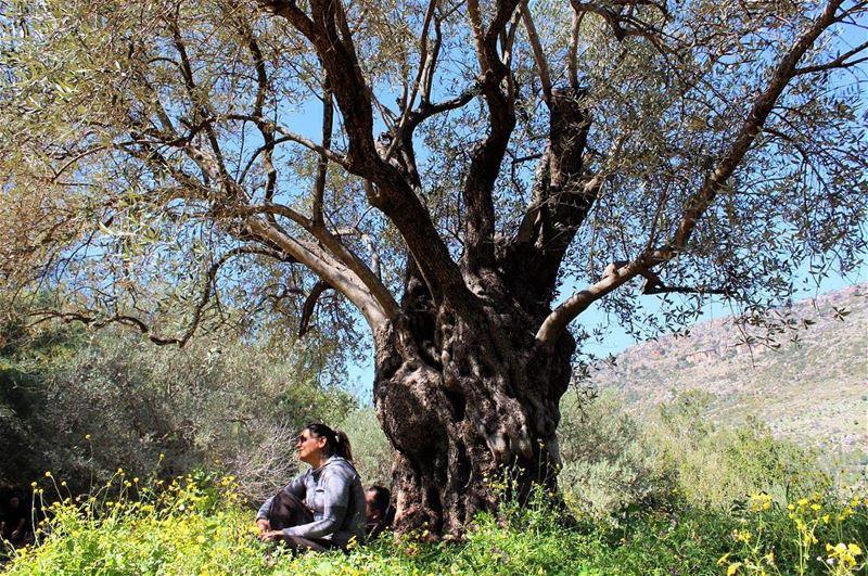enjoyingthemoment treeoflife springbreak hikers enjoyingspring ...