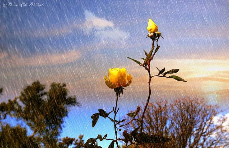 Gardons espoir !__ 961lens naturephotography nature_perfection ... (USJ CEU Liban Nord)