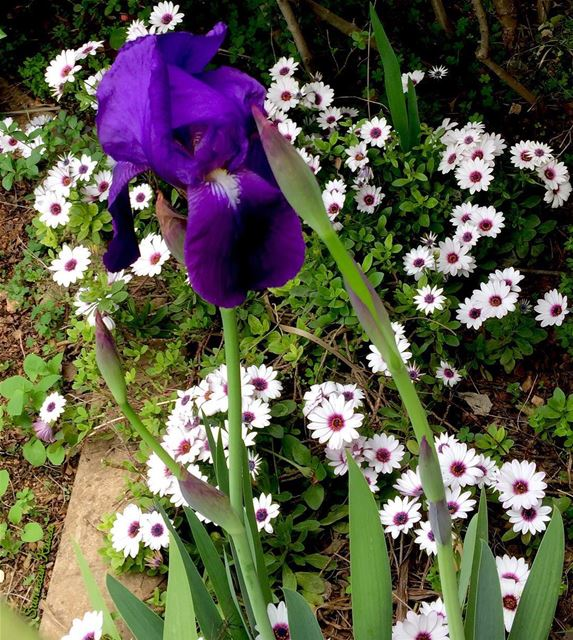 spring flowers colors my garden...