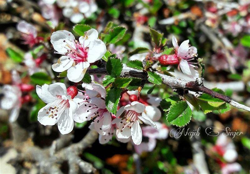 Spring flowers plant plants flower lebaneseinstagram ...