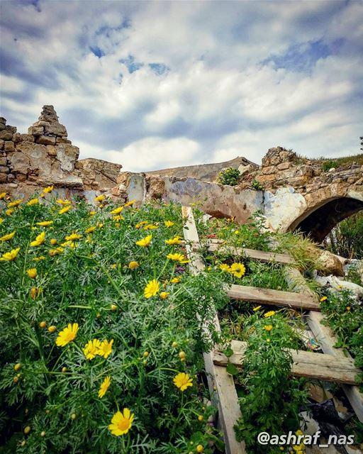 عن أيّ ربيع بغني عن أيّ ربيع بقولهالناس يلي عم تسقط هنّ أبريا ومين المسؤول (Tyre, Lebanon)