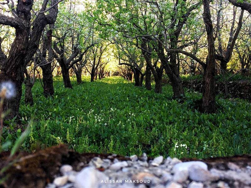 """""""هناك شيء رائع في كل ما تحتويه الطبيعة."""" ارسطو 💫💫💫💫💫💫💫💫💫💫💫💫💫� (Bakhoun, Liban-Nord, Lebanon)"""
