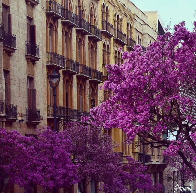 livelovelebanon livelovebeirut ptk_lebanon lebanonspotlights ptk_flowers... (Beirut, Lebanon)