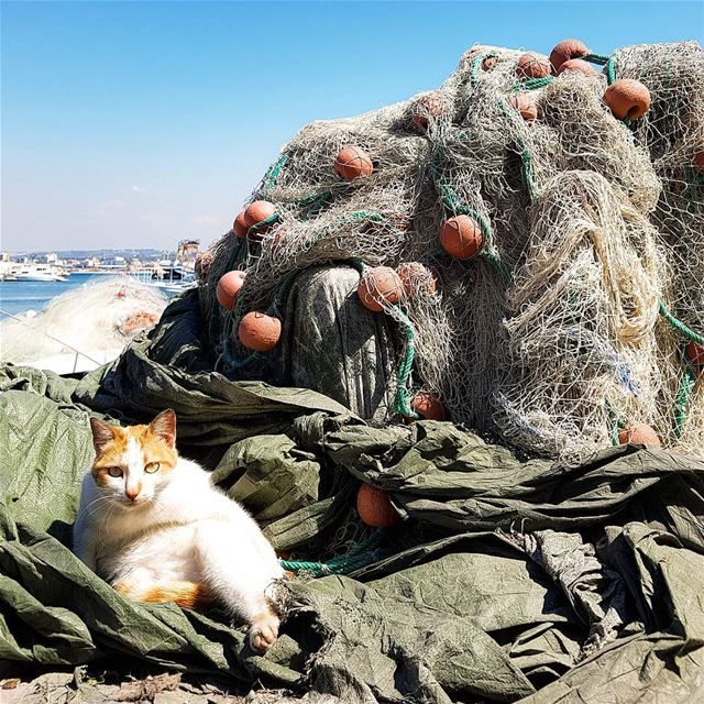 The gourmet cat in a port of tyre lebanonIl gatto ghiotto del ... (Tyre, Lebanon)
