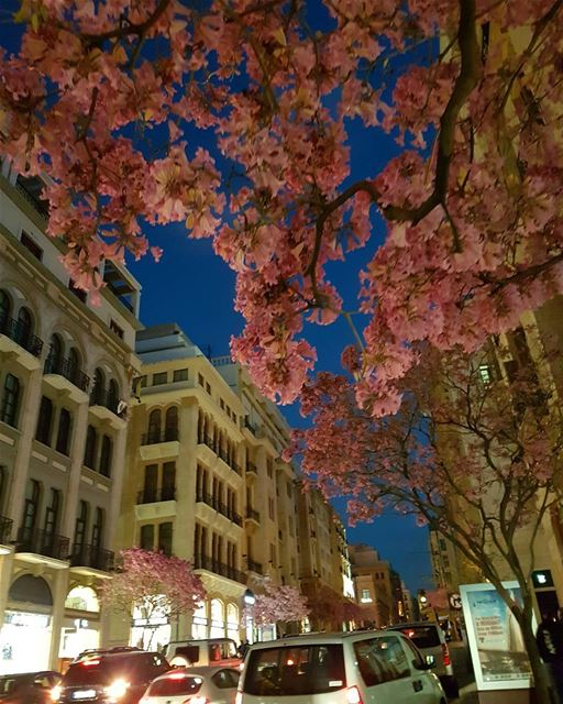 I see trees of green, red roses too🎶I see them bloom for me and you🎵... (Downtown Beirut)