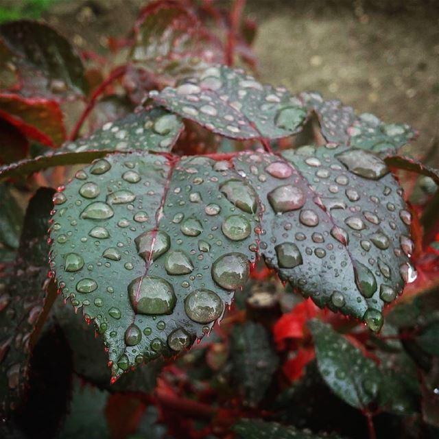 Back😌😜 aWeSoMeNeSs photography leaves rain plantsofinstagram...