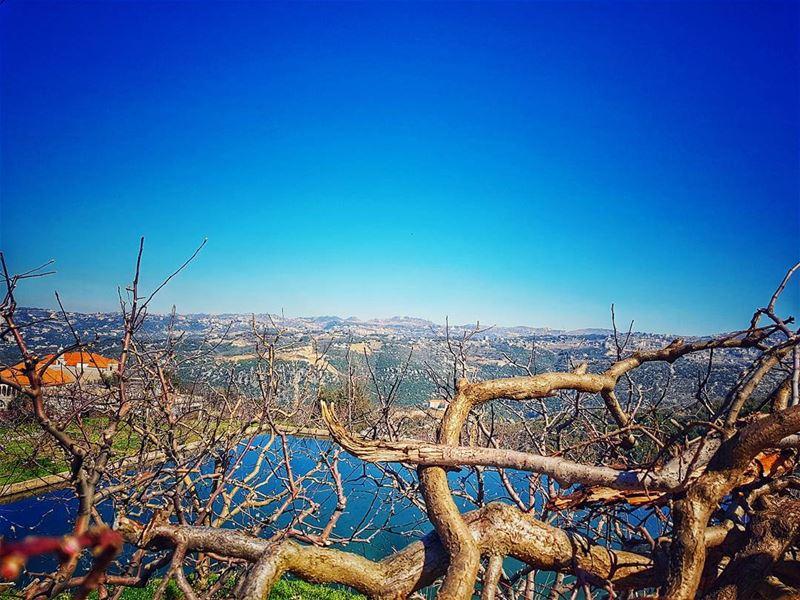 Treat every single day as a lifetime 🔝 trees livelovelebanon ... (Baskinta)