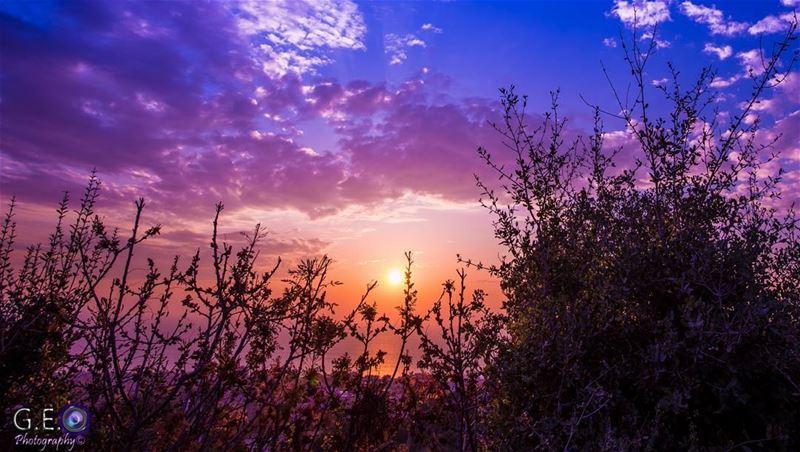 sunsetmagic sunsettrees magenta beachsunset nature naturephotography...