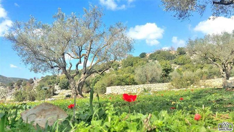 أسعد الله مساءكم بكل خير ☺ nature naturelebanon spring lebanonature ...